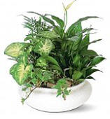 Plants and Houseplants delivered to Delaware, AL